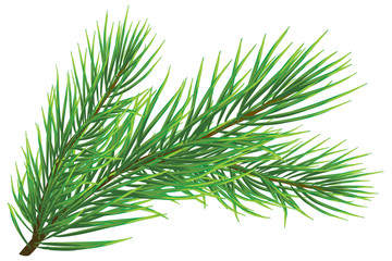 Fir twig isolated on white (rasterize from vector)