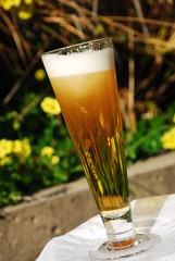 Tall Glass of Frosty Beer