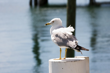 seagull standing on wooden post in a marina