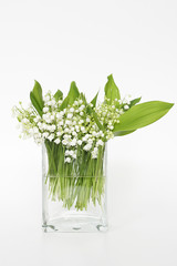 Lily of the valley on white background.