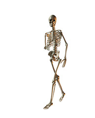 A illustration of a skeleton on a white background