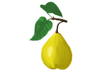 pear01