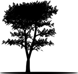 Tree. The isolated silhouette of a tree with leaves.