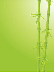 Clean bamboo background