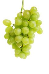 longly vine