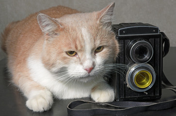 Cat with the camera