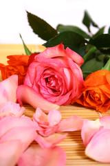 Closeup of pink rose petails