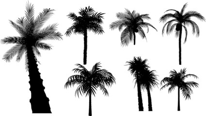 7 vector tropical palms and trees
