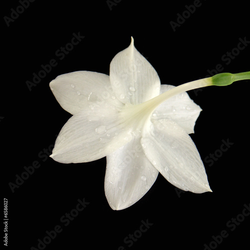 Fleur Blanche Sur Fond Noir Stock Photo And Royalty Free Images On