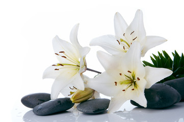 Wall Murals Water lilies madonna lilies with spa stone