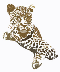 Leopard portarait graphic