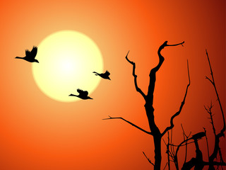 Beautiful sunset with wild goose and tree