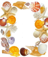 pretty summer frame from shells