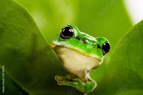 Tv Frog Preis