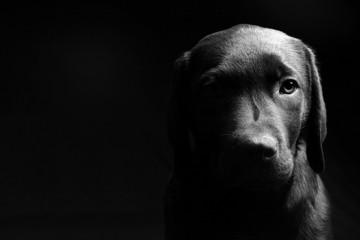 Puppy Light and Dark - Head On