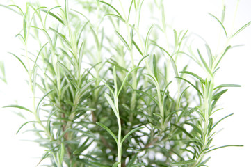 Foto op Plexiglas Draw erba aromatica