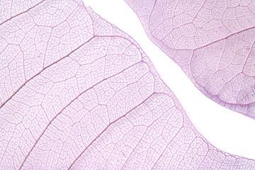 Photo sur Toile Les Textures Skeleton leaves