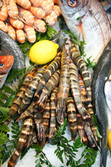 Tiger , Royal Shripms on the ice. Beautiful Seafood.