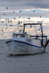 bateau de pêche port oiseau