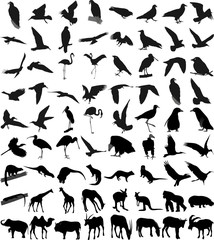 Many silhouettes of different animals and birds