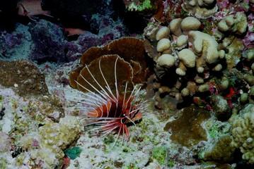 Underwater life of coral reef 66
