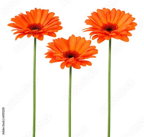 Fleurs oranges photo libre de droits sur la banque dimages fotolia fleurs oranges thecheapjerseys Image collections