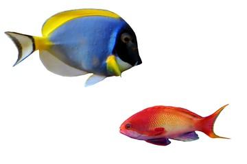 poissons6