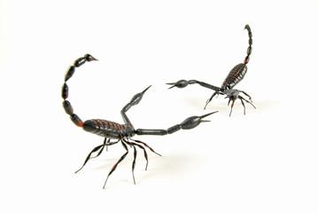 scorpion vs scorpion 2