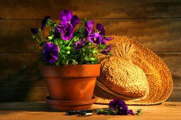 Wall Murals Pansies Purple pansies with old straw hat
