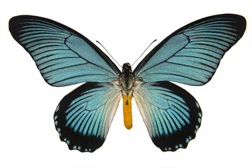 Beautiful isolated tropical butterfly