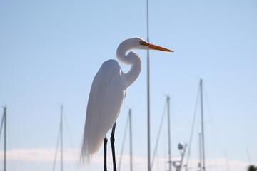 white sea bird
