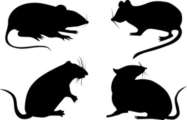 four rat silhouettes
