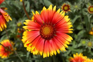 Graceful tropical flower