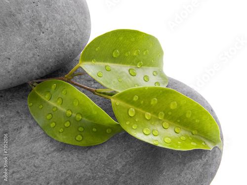feuille et pierre zen photo libre de droits sur la banque d 39 images image 7052036. Black Bedroom Furniture Sets. Home Design Ideas