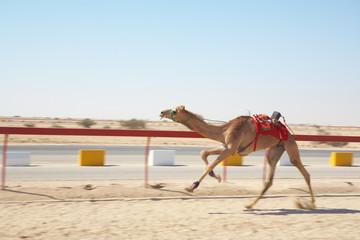 Robot camel racing