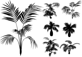 bamboo and other tropical plant VECTOR