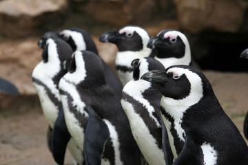 Inquisitive Penguins