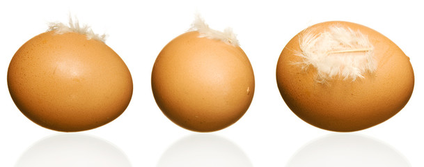 Egg with plumelet. 3 images.