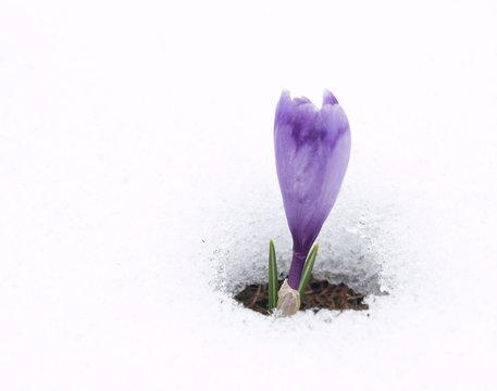 Spring messenger