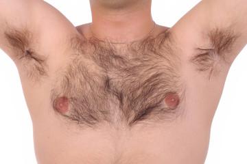 shaggy chest