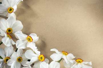 Garden Poster Narcissus Narcis frame