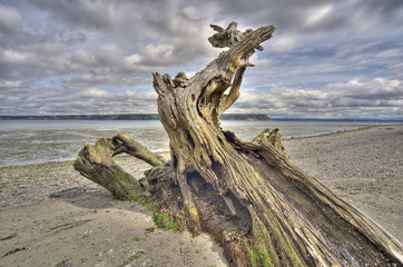 Driftwood on Whidbey Island, Washington