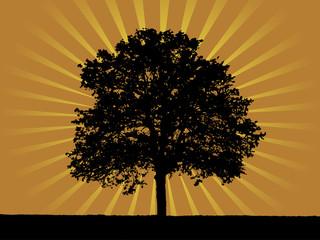 Shining tree 3