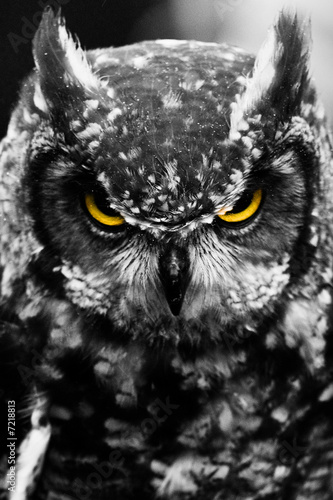 Fotomurales Owl