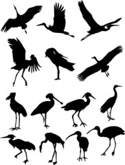 Collection silhouettes cranes, flamingos and storks