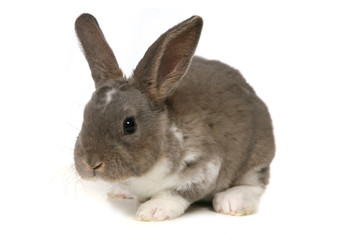 Adorable Bunny on White Background