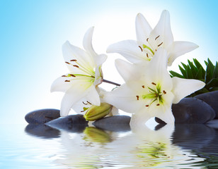 Wall Murals Water lilies madonna lily
