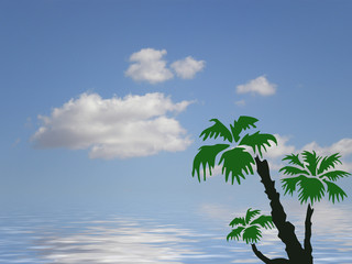 palm tree and ocean