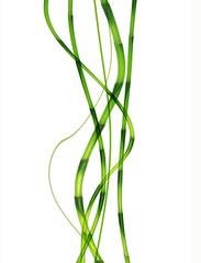 dynamic bamboo
