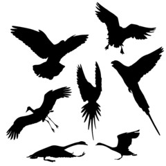 flying bird vector silhouettes